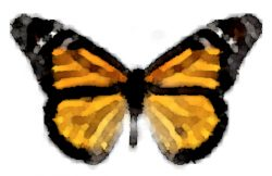 The Butterfly Glass