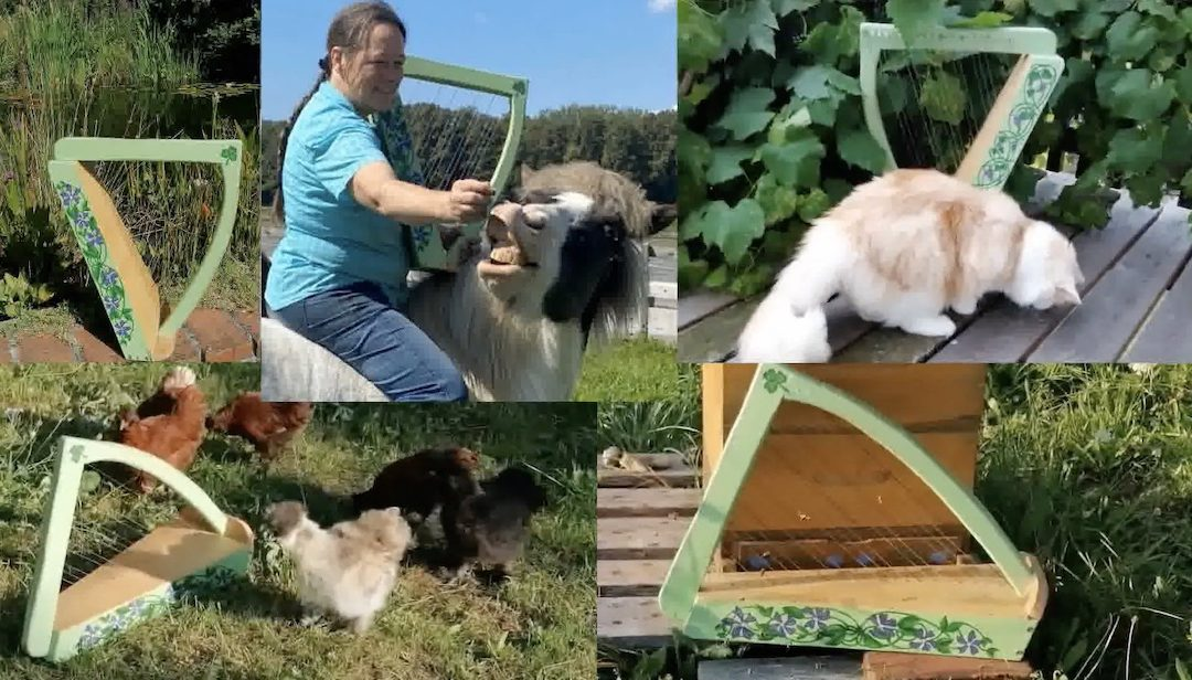 Do Animals get the Blues? (Yes! If they're lucky enough to be on Susanne's farm)
